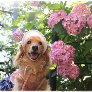 ★重なる花びらが、可愛い♪★