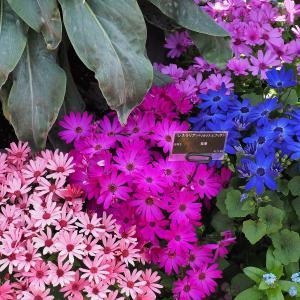 京都府立植物園 -早春の華々展-