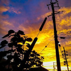 ある日の夕焼け