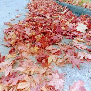 Poem「ALL RIGHT」・ 北海道の大自然の紅葉をどうぞ