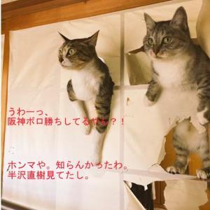 阪神 9-3 ヤクルト