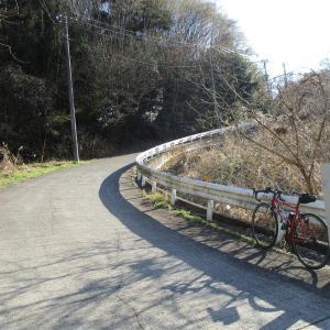 城山湖 桜開花状況
