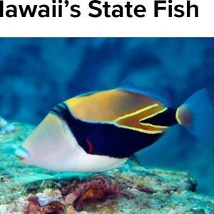 ハワイの州魚「フムフムヌクヌクアプアア」より長い名前の魚!?