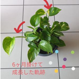 観葉植物の変化