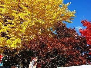 色とりどりの紅葉!!!河口湖もみじ祭に行って来ました♪