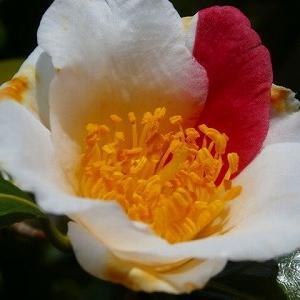 夏の花々の種まき♪&脳転移の疑惑・その後&主治医変更で解った事。