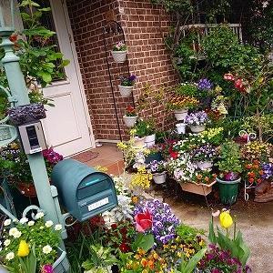 今のお庭の様子♪&豪雨警報・謎のTwitter凍結&情けは人の為ならず