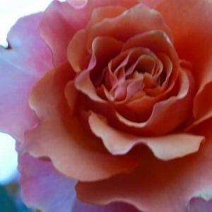 切り花品種ブラッドオレンジ☆本日は通院日。病院も人も患者が戻ってる。仔猫動画まとめ