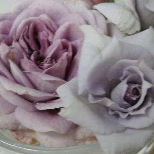 薔薇の青さ☆海の青さ☆夏の終わり?美味しい給食♪