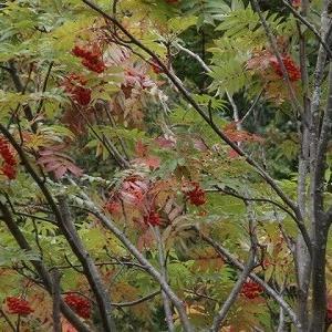 夏花と紅葉とがゴッチャ!?奥日光の旅と父の傷心