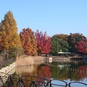近場でも秋は堪能出来る♪県立公園の紅葉と薔薇園♪