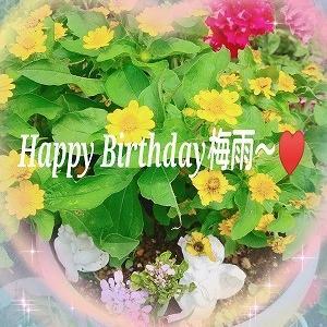 【コメント欄開けてます】Happy Birthday梅雨〜(笑)今が盛りの花☆沢山のありがとう!