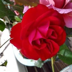 真紅の薔薇☆マリアンデール&昼飲み!大人の女子会・誕生日会♩