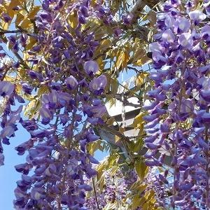 藤にツツジにポピーにと色とりどりの花々🎵HAPPYアイスクリーム🎵