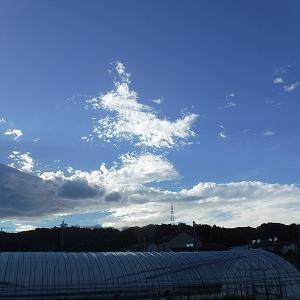 台風によるフェーン現象雲?