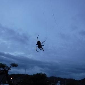 『蜘蛛の糸』のもしも?