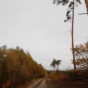 ミレンカのクラスの秋の家族ハイキング