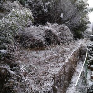 初雪に振り回される一日。