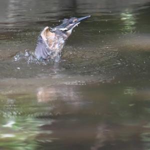 ちびっ子の水浴びからの水中飛び出し