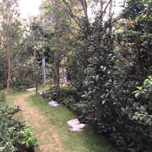 ロマンの森✳︎子供が喜ぶ秘密の小道