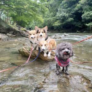メイも川遊び