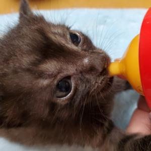 保護猫の記録 生後28日目