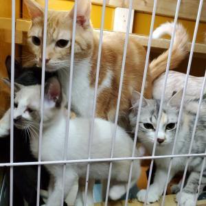 我が家の保護猫達