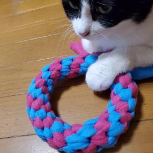 猫もおもちゃが欲しい?