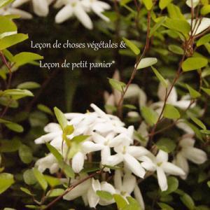 六月は茉莉花の香り。