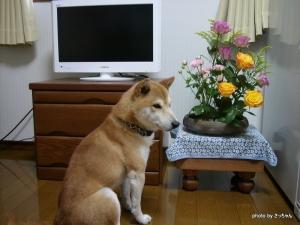 ビック&花