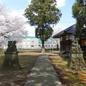 「逆さ狛犬」日吉神社と桜