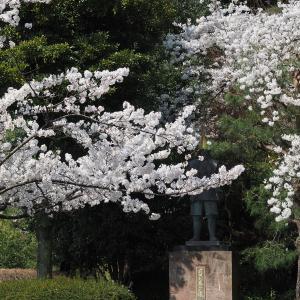 2020年金沢城周辺の桜(総集編)