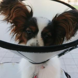 ANRI、短い男犬生でした