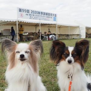 友人が家庭犬訓練競技会で1席に!