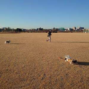 トレーニング中は寒いけれど、遊んでいるときは寒くないの?