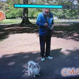 LEVIN、テレビ朝日の「じゅん散歩」に出ました