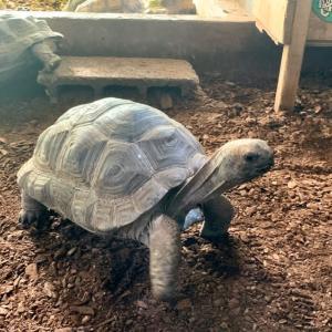 見て!ふれて!おどろく!!日本初体感型動物園iZoo(^_−)−☆