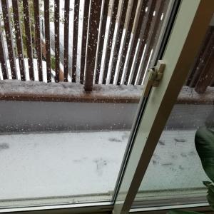 雪で良かった?!