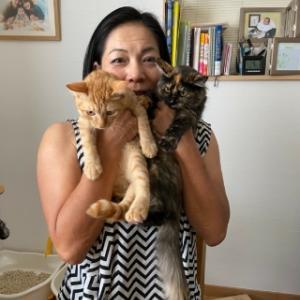 沖縄の保護猫の里親になりました。