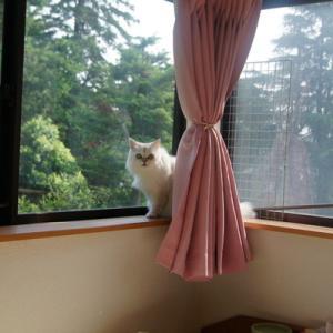 窓が大きいから心配..(ノ_・。)