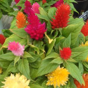 綺麗な花。。。明日から頑張ろう!!!!