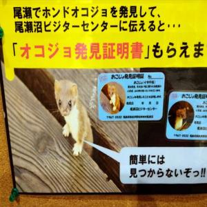燧ヶ岳(日本百名山、東北以北で最高峰)に登頂