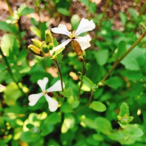 ■自然治癒力に働きかけるアロマテラピー
