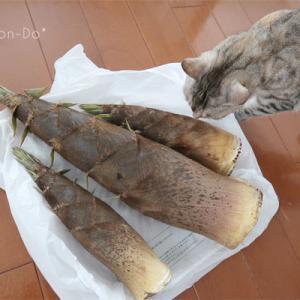 ◆猫のたけのこパトロール隊◆