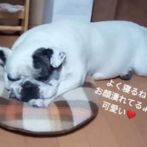 おかあちゃん 夏の行事はなくなるよ(;_;)
