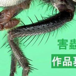 バーテック公募展「害蟲展」に協賛!