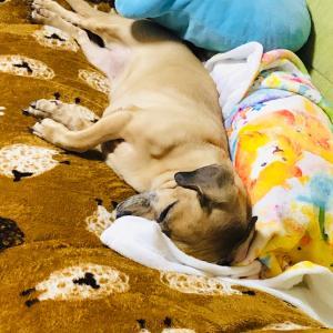 爆睡。おやすみなさい