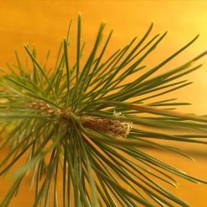 木々と 植物と クリスタルと 動物と