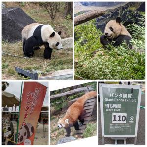 ★上野動物園へ行ってきました★ 我喜欢大熊猫