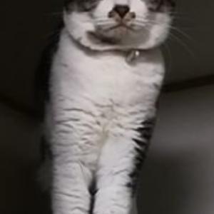 """""""~見つかったそうです~りおたん【迷子猫探しています】"""""""
